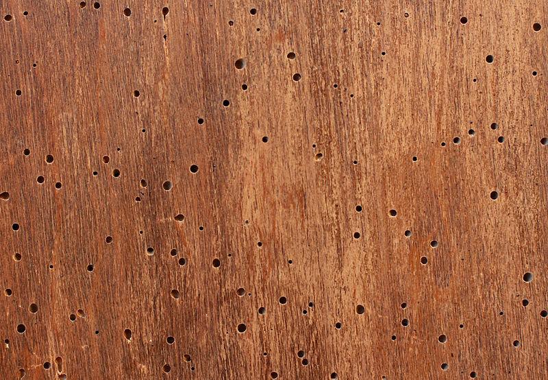 Laat houtworm je meubels niet aantasten