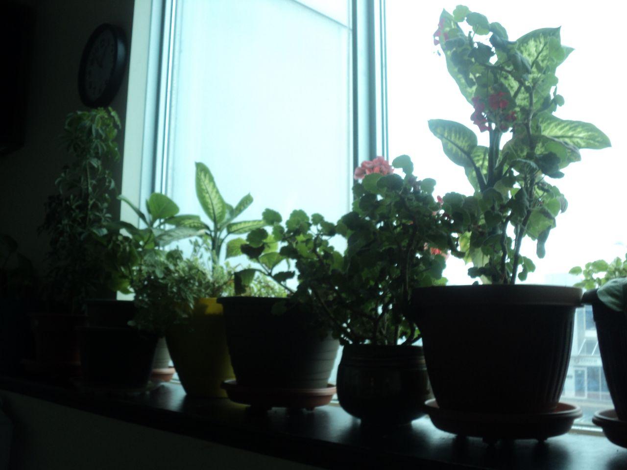 waarom kamerplanten niet in volle zon
