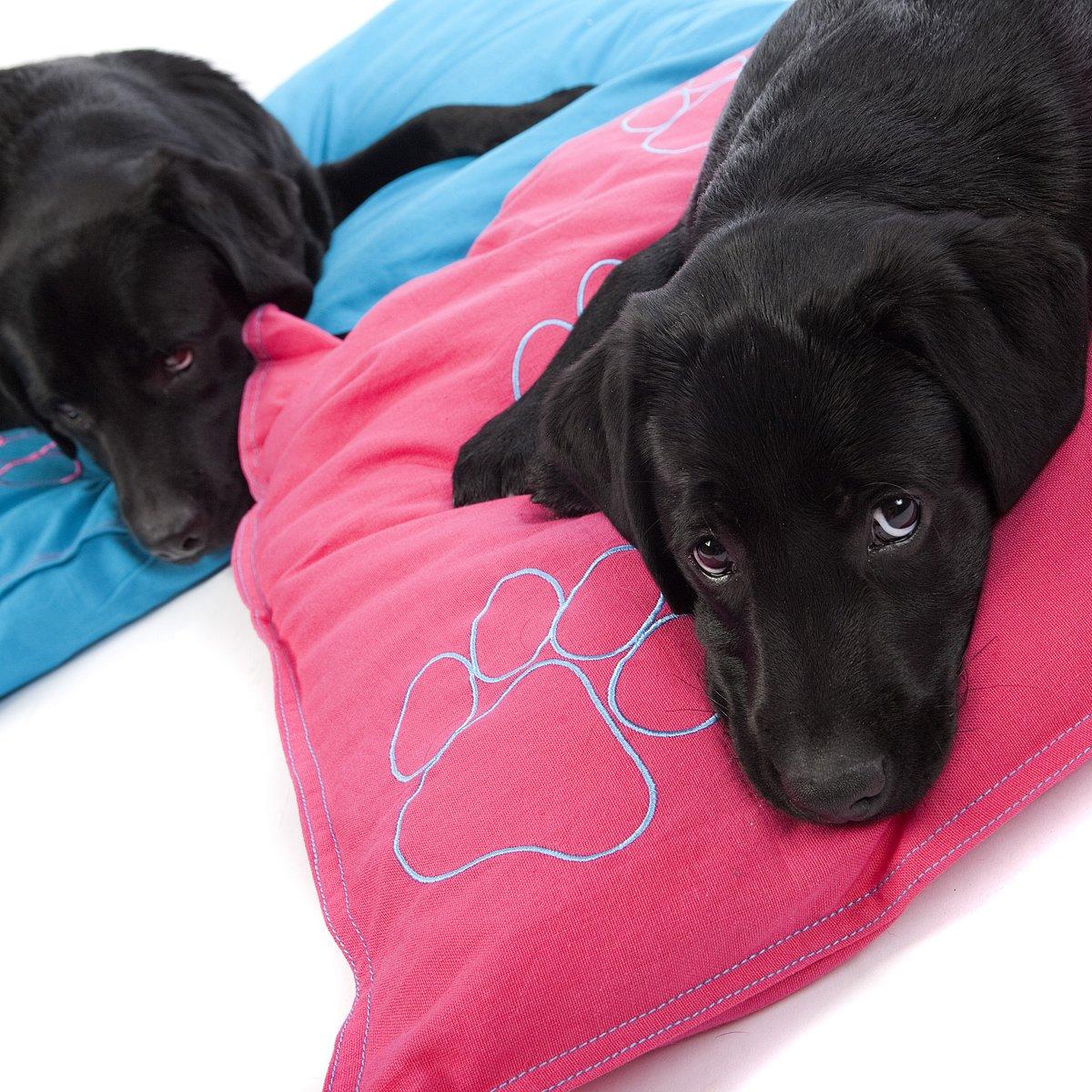 De revolutie in hondenbedden!